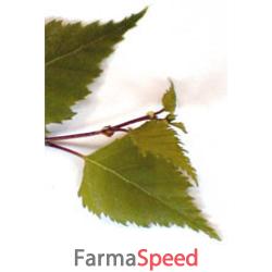 msa betula verrucosa 50 ml