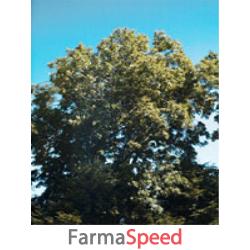 msa fraxinus excelsior 50 ml