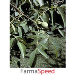 msa juglans regia 50 ml