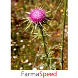 tsa sylibum marianum 50 ml